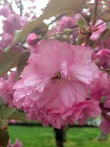 photo- pink